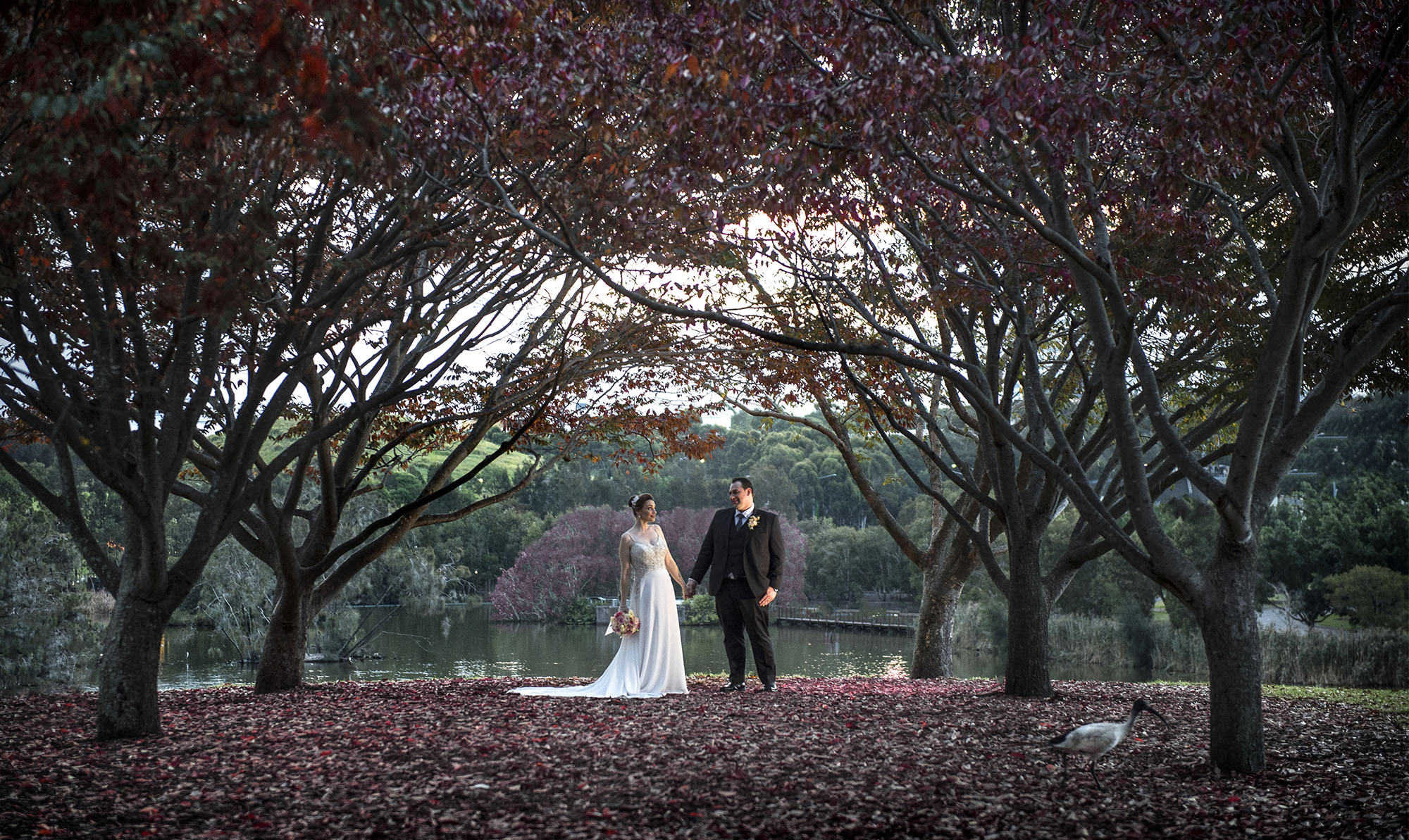 waters edge sydney wedding